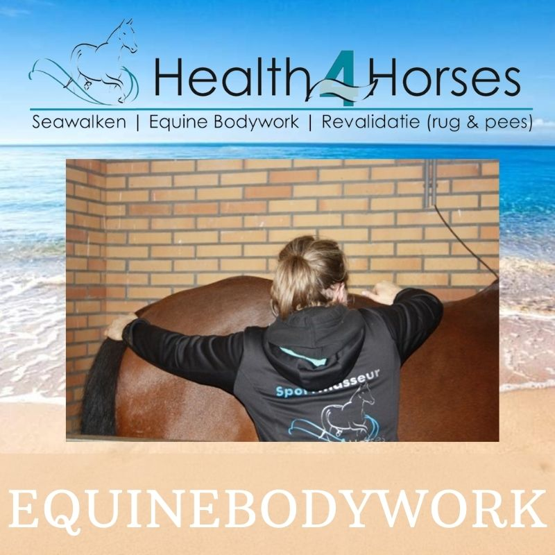 EquineBodywork - Health4Horses - Seawalken