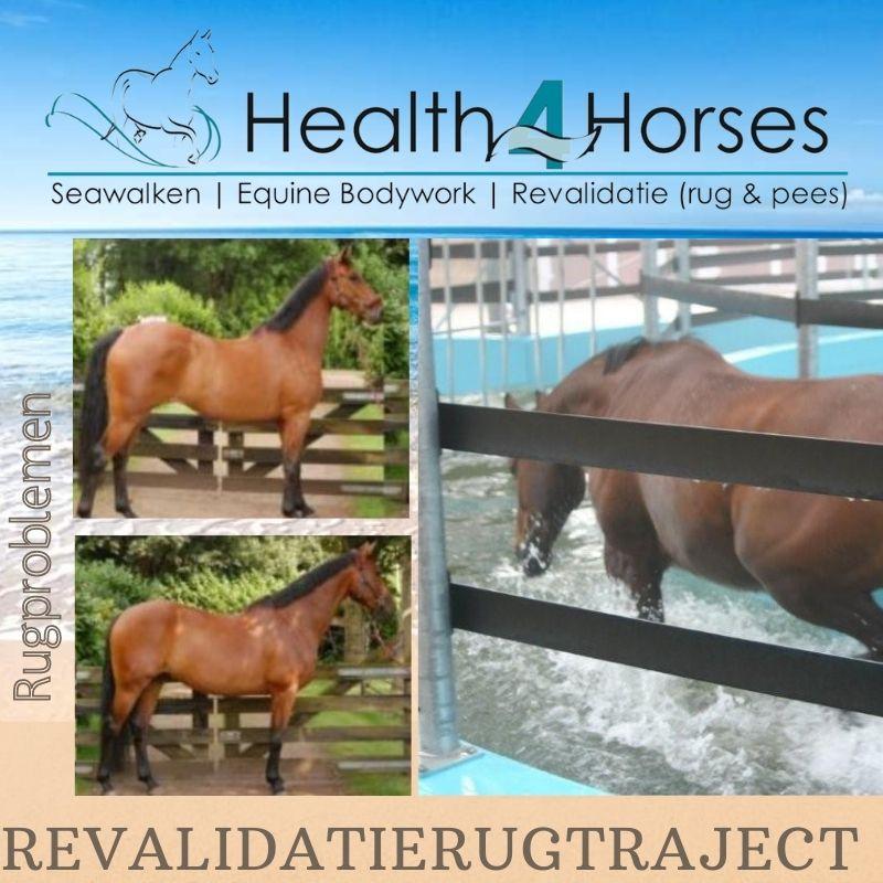 REVALIDATIERUGTRAJECT 1 - Health4Horses - Seawalken 14