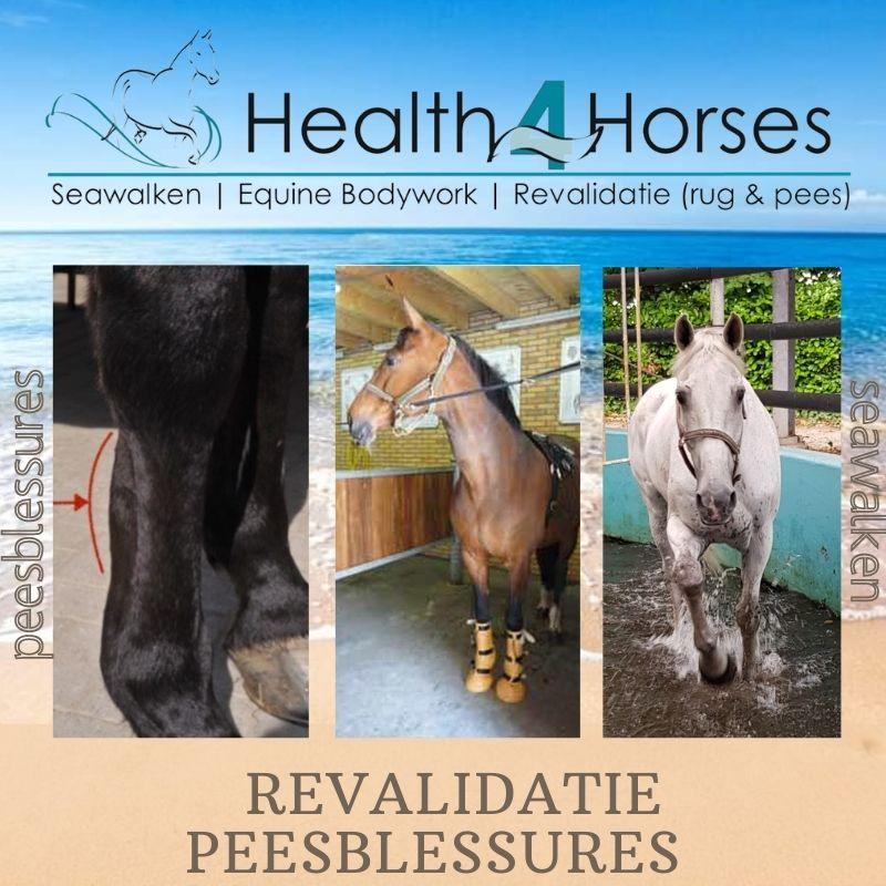 Revalidatie peesblessures - Health4Horses - Seawalken