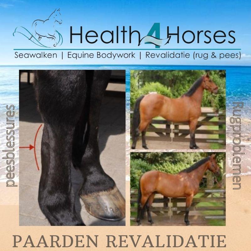 Paarden revalidatie - peesblessures - Health4Horses - Seawalken