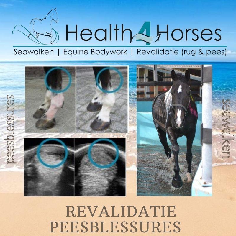 Revalidatie peesblessures 1 - Health4Horses - Seawalken 14