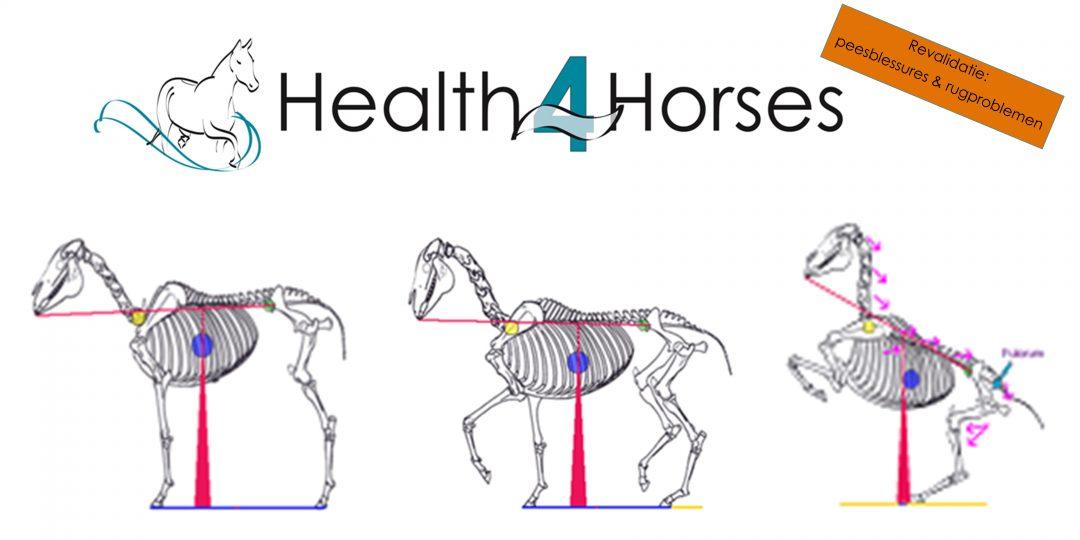 Rechtrichten - balans paard - Health4Horses